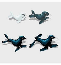 Four different sea lion white grey and blue vector