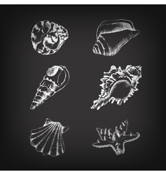 set of hand-drawing with shells vector image