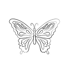 sketch butterfly vector image vector image