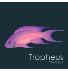 Aquarium fish Tropheus vector image vector image