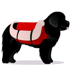 Newfoundland dog lifesaver vector