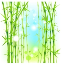 Bamboo fresh background vector image