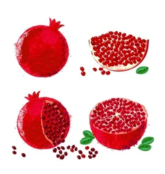 Pomegranate fruits vector