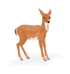 Roe-deer vector