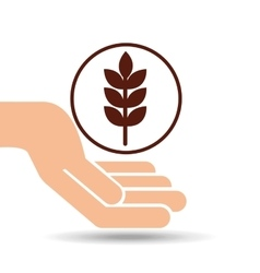 Hand holding wheat spike vector