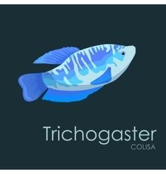 Aquarium fish Trichogaster vector image vector image