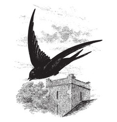 Common swift flying through the air by a vector