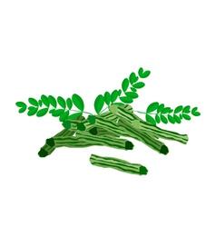 Fresh moringa fruit and leaves on white background vector