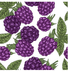 Hand drawn sketchy berries ripe blackberry branch vector