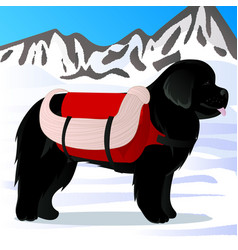 newfoundland dog lifesaver in mountains vector image vector image