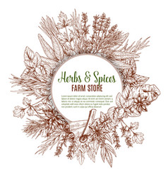 spices and herbs sketch poster vector image vector image