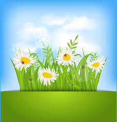Spring nature background with camomiles ladybugs vector