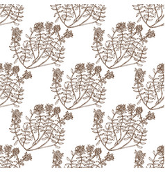 Wild thyme seamless pattern vector