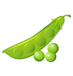 Fresh peas and peapod vector