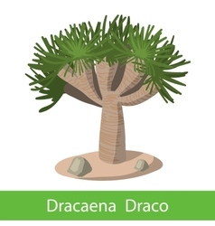 Dragon tree on a white background vector