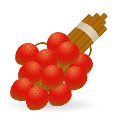 Lychee isolated vector