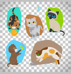 Cute cats set on transparent background vector