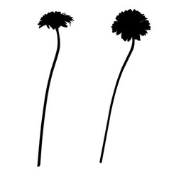 Two gerbera silhouettes vector