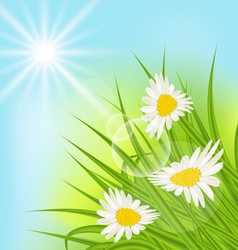 Summer nature background with daisy grass blue sky vector