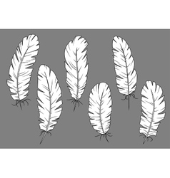 Quill pens icons with white fluffy feathers vector