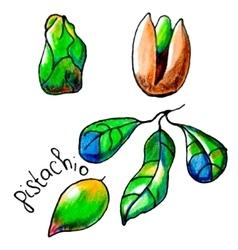Pistachio vector