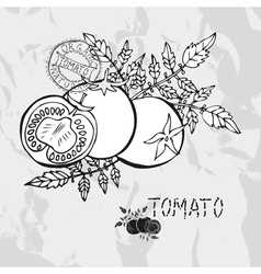 Hand drawn whole and sliced tomatoes vector