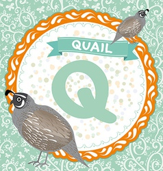 Abc animals q is quail childrens english alphabet vector