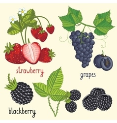 Fresh fruit mix isolated vector image vector image