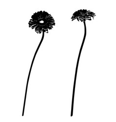 Two gerbera stencils vector