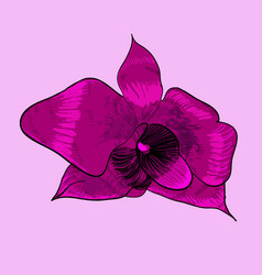 blooming decorative orchid concept vector image vector image
