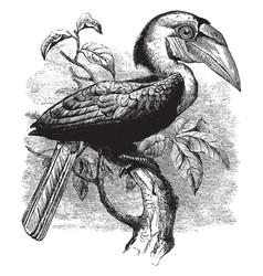 Plait billed hornbill vintage vector