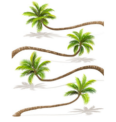 palm trees with shadow vector image