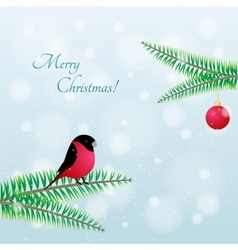 Christmas bird bullfinch on branch vector