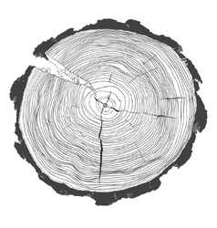 Annual tree growth rings with grayscale drawing of vector