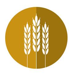 harvesting wheat ears shadow vector image