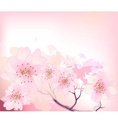 sakura spring cherry tree vector image