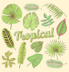 tropical leaves hand drawn doodle with palms vector image