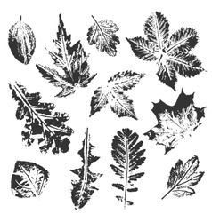 Collection of leaves imprints vector image
