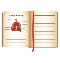 Anatomy of human lungs on the page vector