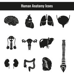 Human internal organs Anatomy set icons vector image vector image