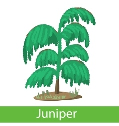 Juniper cartoon icon vector image