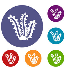 Seaweed icons set vector