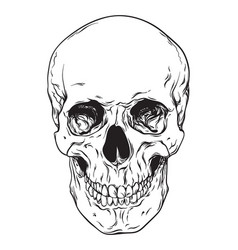 Line art human skull isolated vector