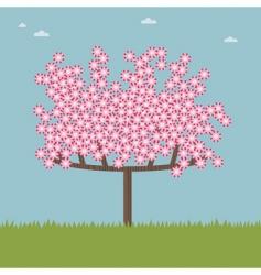 cherry blossom tree vector image