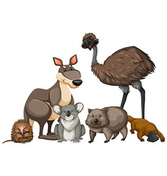 Wild animals from Australia vector image