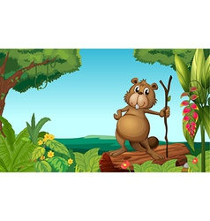 A beaver in the woods vector image
