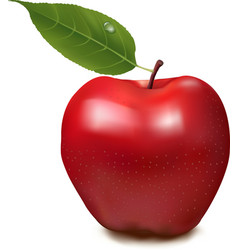 fresh red apple on white background vector image