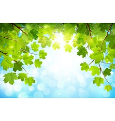 Green leaves on branches vector