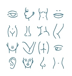 Human body parts line icons for plastic or vector image