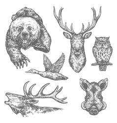 wild hunting animals and birds sketches vector image